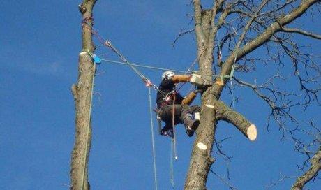 Professionnel pour l'abattage et l'élagage d'arbre à Pontcharra